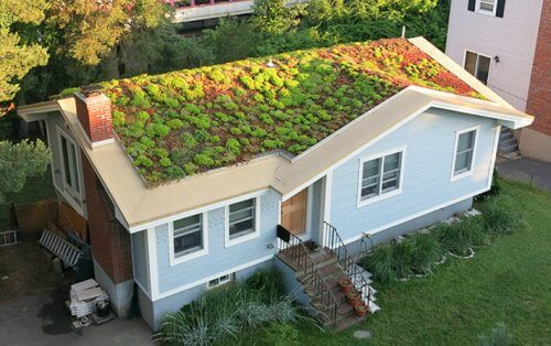 Green Roofing-1